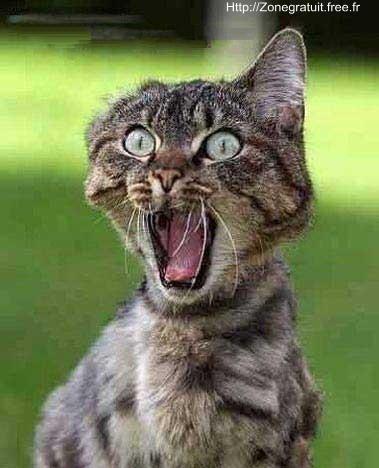 Y'a pas un chat sur ce forum de mairdhe !!  8-O Peur-de-chat